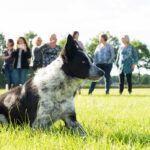 sheepdog-2